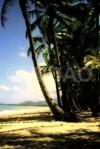 Palmenstrand Cairns Australien verkleinert